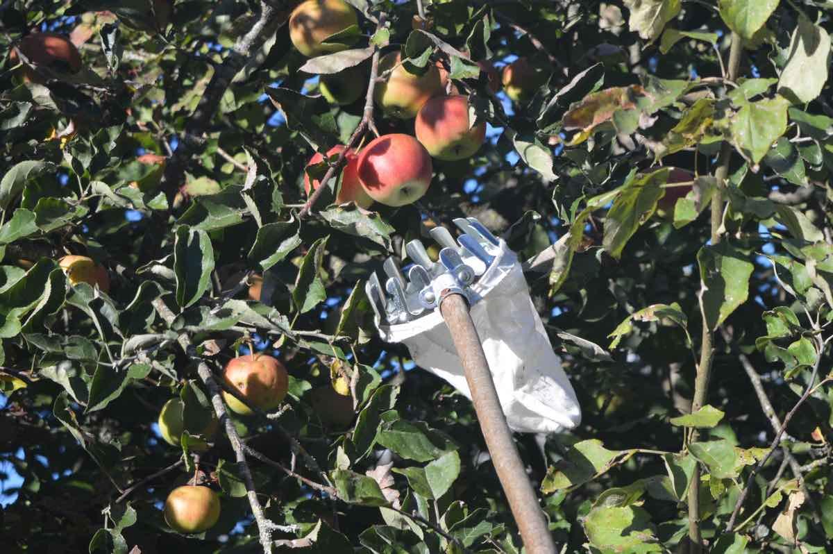 Cueille-fruits Falci fruitplukker